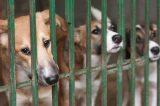"""Roma, """"canili illegali"""": il Partito Animalista Europeo accusa la sindaca Raggi e l'assessore Muraro"""