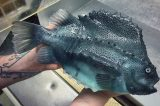 Il pescatore che spopola su Twitter: ecco alcune foto incredibili