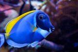 Aeroporto Fiumicino, maxi sequestro di 25mila esemplari di pesci tropicali e coralli vivi da acquario