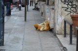 Palermo, cosparso di benzina e bruciato: muore clochard