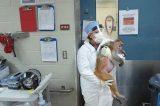 """AIDS. L'indagine: """"I vaccini anti- HIV sperimentali, buoni per gli animali, inutili per l'uomo"""""""