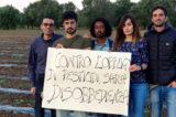 """Puglia Xylella, paura pesticidi. Associazioni, apicoltori e aziende bio: """"Contro obbligo di 4 trattamenti chimici sarà disobbedienza"""""""
