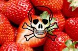 """European Consumers contro la deroga della micidiale cloropicrina: """"Il M5S autorizza le fragole e il pomodoro al fosgene"""""""