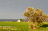 Xylella, fermate la strage di 30 milioni di ulivi nel salento. European Consumers sostiene la lotta di Eliana Fanelli