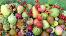 """Rieti. Convegno scientifico """"Semi e Frutti Antichi"""" al Polo Universitario della Sabina Universitas"""