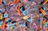 """Ciprofloxacina, l'antibiotico magico. Allarme EFSA: """"Le infezioni diventano più difficili da curare"""""""