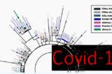 """Covid-19. Epidemia dal Nord Italia? Giannotta: """"Creare un albero filogenetico avrebbe dimostrato che non siamo gli untori"""""""