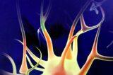 NEURONI SPECCHIO: TRA SCIENZA, FILOSOFIA E ATTUALITÀ