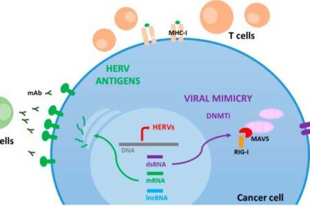 """AIOM: """"Dal Covid ai virus influenzali un possibile vaccino naturale contro il CANCRO"""""""