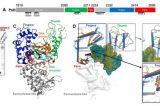 """La Jefferson University scuote i dogmi della scienza: """"Le cellule umane scrivono sequenze di RNA nel DNA"""""""